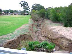 Rumsey Crescent riparian revegetation - BEFORE