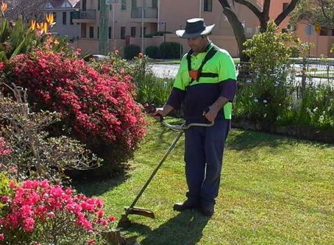 City Services maintaining the lawns of Parramatta